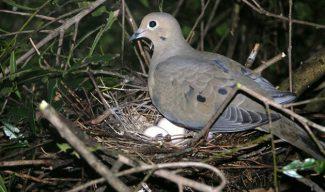 Burung dan Telur